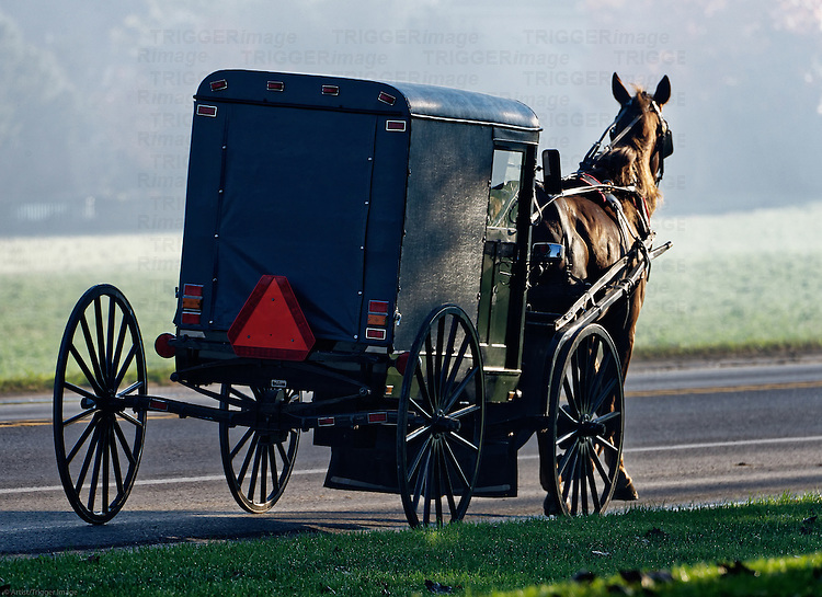Amish buggy, Ronks, Lancaster County, Pennsylvania, USA