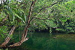 Noah Creek.  Daintree National Park, Queensland, Australia