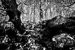 Anciant Woodland Scene in Autumn with large boulders in foreground and leaf litter