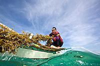Juni, a seaweed farmer from Caluya pulls in a line of seaweeds.