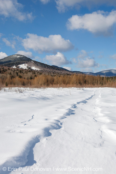 Downes - Oliverian Brook Ski Trail in winter conditions in the White Brook drainage of Albany, New Hampshire. This trail follows the old railroad bed of the Swift River Railroad (1906-1916). And this location is near the old St Johns Camp site. Signs of logging can be seen on the hillside.