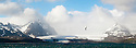Wandering Albatross (Diomedea exulans) flying over the Bay of Isles with Salisbury Plain glacier in the background. South Georgia, South Atlantic. (digitally stitched image)