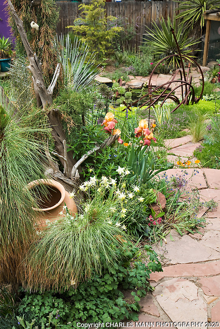 Orangy irises and terra cotta pottery compliment the flagstone walk that leads down to the lower pond in Dan Johnson's Denver garden.