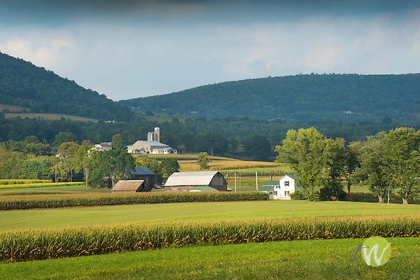 Farmscape in August. Bastress, PA