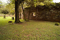 A stray dog wanders the verdant ruins of the mission at San Ignacio Mini, Argentina. Scores of Jesuit missions in the area where Paraguay, Argentina and Brazil meet were built in the 17th century and abandoned when the Jesuits were expelled in the 18th century. Ruins of some of these missions still haunt hilltops in the region. (Kevin Moloney for the New York Times)