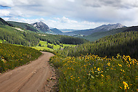 Mountain View of Wildflowers
