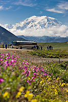 Tourists view of the North and South peaks of Mount McKinley from Stoney Dome in Denali National Park, interior, Alaska. Pink dwarf fireweed in the foreground.