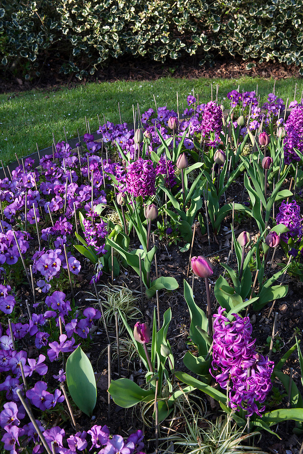 Beautiful flowerbeds on a bright, sunny spring day in Regent's Park, London, England