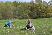 Kinder ernten, sammeln Kräuter im Frühjahr für Kräutersuppe und Wildgemüse - Salat, Wildkräuter, Ernte, Kräutersammeln, essbare Wildkräuter, Gänseblümchen, Bellis perennis