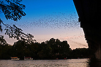 Millions of Congress Ave. Bridge Bats make their nightly exodus in search of food every night during the season when the bats come to austin for the warm summer climate to deliver their pups (babies) in the crevasses of the Congress Avenue Bridge.