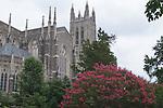 Duke Chapel behind Myrtle tree in bloom