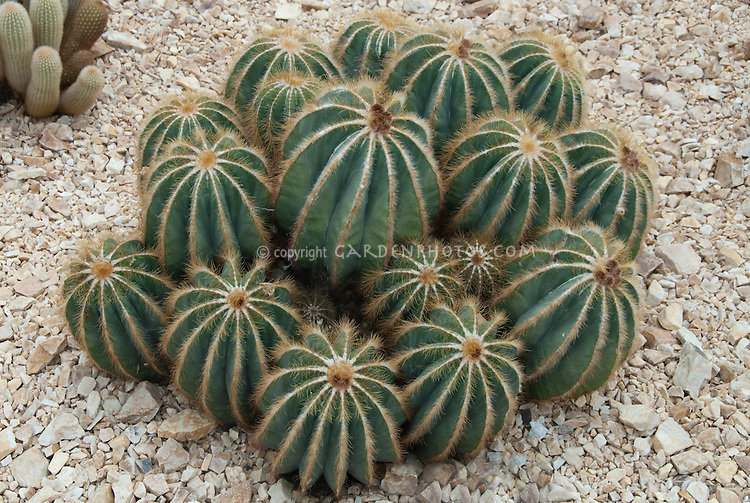 View Types Of Cactus.