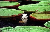 Mauritius - 1996