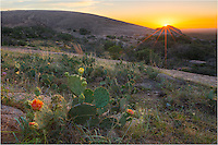 Prickly Pear Cacti close their blooms at night, but I was still able to find some color for this sunrise image at Enchanted Rock State Park in the Texas Hill Country. The sun is rising over Turkey Peak in the distance.