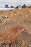 Cape Sebastian South Shoreline Surf Grass - Oregon Coast