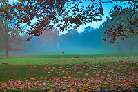 Misty Morning, Golfer, Lining up putt on green, Philmont, Country Club, Philadelphia, Pennsylvania, US, USA, golf,  fall, leaves, fog, misty, beautiful