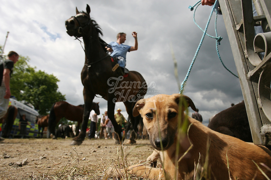 23/6/2009. Spancill Hill horse fair. A scene from the Spancill Hill horse Fair Co Clare.At one time, Spancill hill was said to be Ireland's largest fair with buyers from Britain, Russia, Prussia, and France competing to purchase the best stock for their Imperial armies. Recently the fair has been revived and is now going from strength to strength..Spancill Hill is also traditional Irish folk song which bemoans the plight of the Irish immigrants who so longed for home from their new lives in America, many of them who went to America with the Gold Rush.This song is sung by a man who longs for his home in Spancill Hill, his friends and the love he left there. All the characters and places in this song are real. Picture James Horan/Photocall Ireland