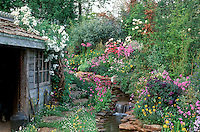 Rustic shed, Butterfly Garden, streamside plantings. Lush primula, irises, roses Rosa climbing on shed roof, running water stream waterfall garden, gorgeous flowers, naturalistic, garden tools, attract wildlife to the garden with great charm in spring