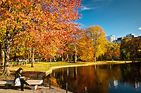 Beautiful yellow, orange, red and green trees on a sunny day at the pond in the Boston Commons park in Boston