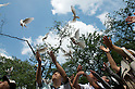 August 15, 2011, Tokyo, Japan - Visitors at Yasunuki shrine release white doves to symbolize peace during commemorations marking the end of WW2. (Photo by Bruce Meyer-Kenny/AFLO) [3692]