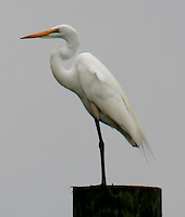 nature photography,egret,bayou,Port Sulphur,La.wildlife,
