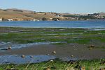 low tide and birds in Bodega Bay