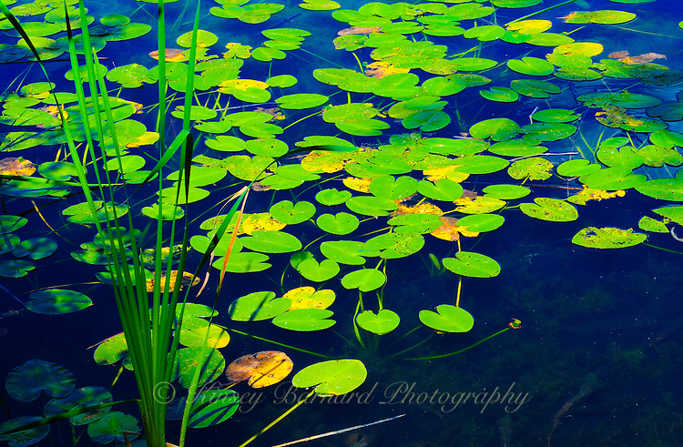 &quot;SYMPHONY IN BLUE &amp; GREEN&quot;<br />