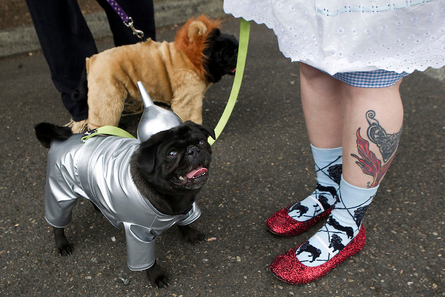 A black pug dressed up as the Wizar of Oz's Tim Man, with his owner in red sparkling shoes, prepares to walk the runway and compete in the Parade of Pugs contest, organized by the Oregon Human society. Last year's Pug Crawl raised more than $8,000 for the animals at OHS, which is the Northwest's oldest and largest humane society.