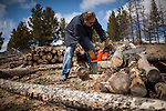 Former Montana Governor Brian Schweitzer cuts firewood at his Georgetown Lake home in Anaconda, Montana, May 7, 2014.<br /> CREDIT: Max Whittaker/Prime for The Wall Street Journal<br /> BRIAN