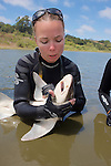 Katie Kent Working Up Leopard Shark