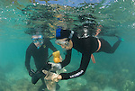 Charlotte Watson & Chris Glasby snorkels down to collect sand which may contain polychaete worms.