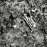 CLOSEUP OF CRUSHED BRIQUETTE<br /> 8X Magnification