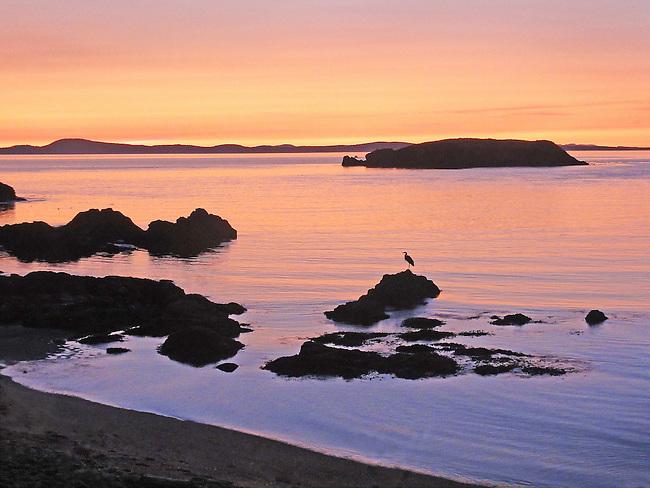 heron perched on tidal at sunset, Rosario Beach, Anacortes, WA