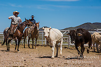 Cowboy Photo Cowboy, Cowboy and Cowgirl photographs of western ranches working with horses and cattle by western cowboy photographer Jess Lee. Photographing ranches big and small in Wyoming,Montana,Idaho,Oregon,Colorado,Nevada,Arizona,Utah,New Mexico.