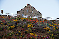 A hillside covered in blooming plants (yellow, red, and purple) provide foreground for the sandstone assistant keeper's house at the Point Sur Light Station.  Three families lived in this house at one time.