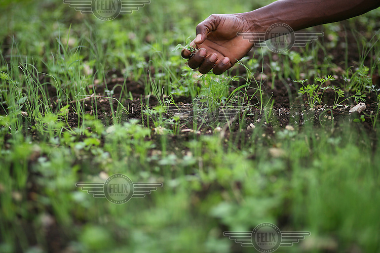 Gregoir Pierre 43, shows off the vegetables sprouting in the farmers' gardens in Cap Rouge.