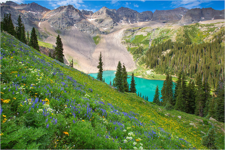 From a cliff above Lower Blue Lake, near Ouray, Colorado, the wildflowers are amazing in the summer. If you keep climbing, you reach the Middle and Upper Blue Lakes, which are amazing, as well. The Colorado Wildflowers on this hike are colorful and abundant, so take some liquid and enjoy the high alpine wonders that this area can offer