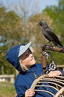 Dohle, zutrauliches Tier mit einem Kind, Corvus monedula, Jackdaw, Choucas des tours