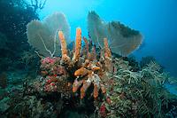 Sponges and fan coral .Deep Angel Reef.Newfound Bay.St. John, U.S. Virgin Islands