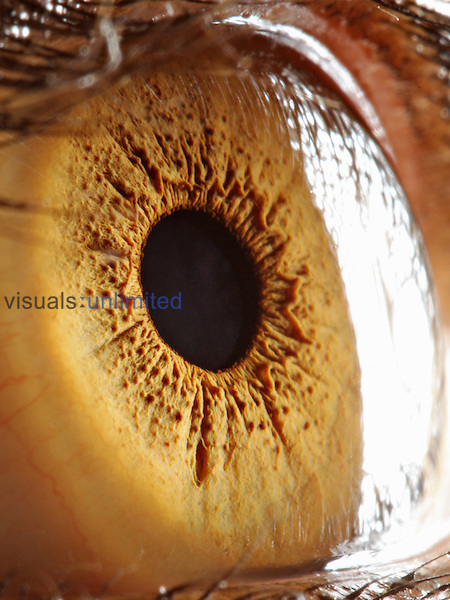 Close up of human eye.