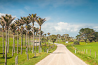 Gravel road through farmland near Karamea with Nikau palm trees, Kahurangi National Park, West Coast, Buller Region, New Zealand