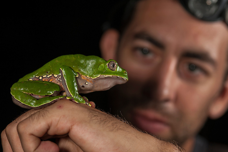 Conservationist David Johnston looking at Giant Monkey Frog (Phyllomedusa bicolor) in lowland tropical rainforest, Bahuaja-Sonene National Park, Puno, Peru.
