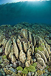 Coral reef in the far northern outer Great Barrier Reef. Coral formations are streamlined because of heavy surf and waves throughout the year. Mostly Acropora palifera