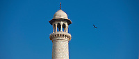 Minaret of The Taj Mahal mausoleum and Indian black kite bird, Uttar Pradesh, India