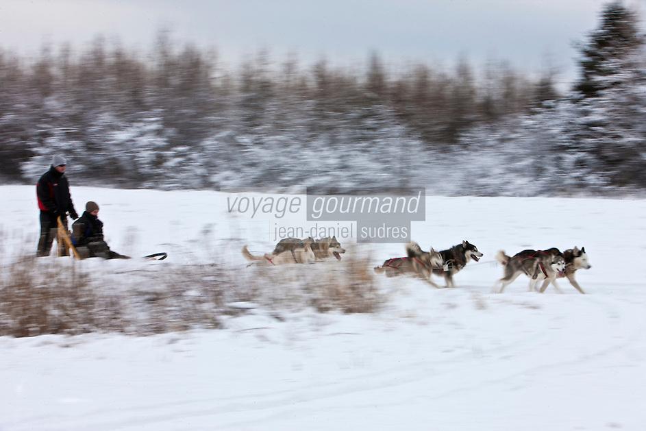 Amérique/Amérique du Nord/Canada/Québec/ Env de Québec/Île d'Orléans/Saint-Jean-de-l'Île-d'Orléans: Traineau à chien avec Expéditions Mi-loup