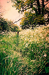 Teenage girl walking away from camera through footpath in rural countryside with cow parsley