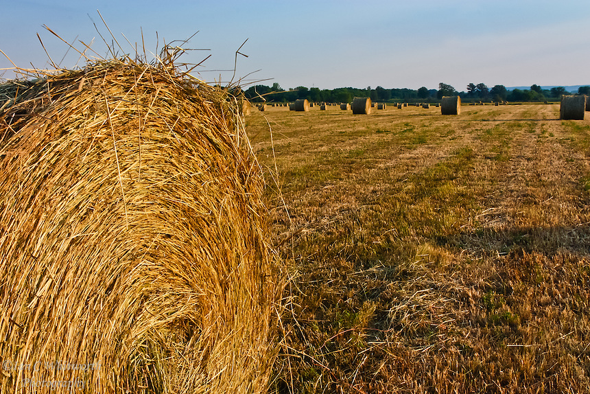 Hay is cut and rolled in a farm field awaiting pick up for use over the long winter