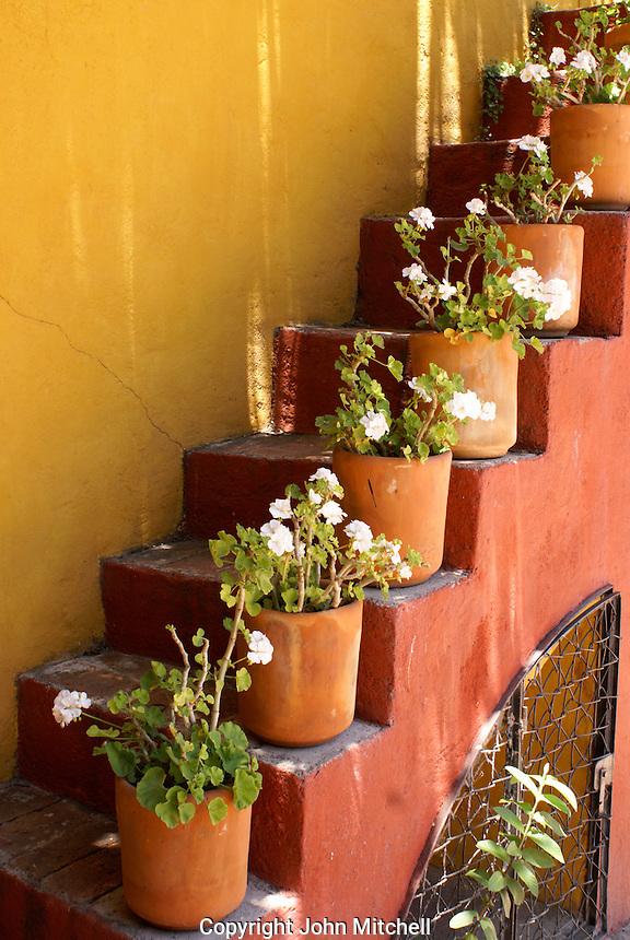 Flower pots on a stairway in San Miguel de Allende, Mexico