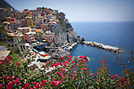 Photo of colorful buildings on the background cliffside with pink flowers in the foreground in Manarola, Italy