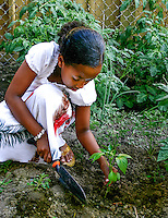 A young Somali-canadian girl carefully plants a pepper plant in her community garden plot.